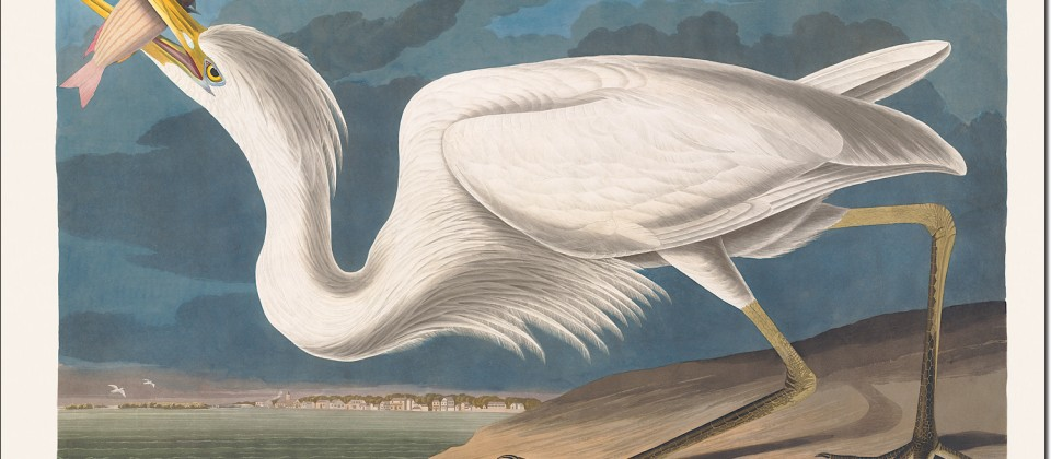 Admiring the Feathered Race: John James Audubon's Birds of America